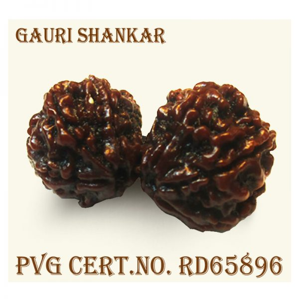 GAURI SHANKAR-5620-X567.