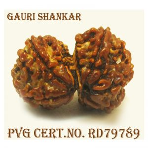 GAURI SHANKAR-4566-T031