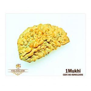 1Mukhi-6646gm-J785-2
