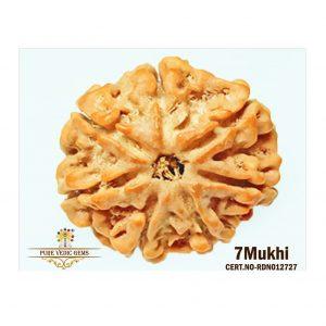 7Mukhi-3152gm-C176-2