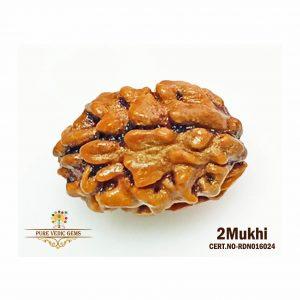 2Mukhi-1728gm-Y873-rdn016024
