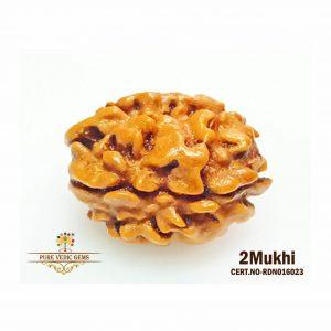 2Mukhi-1806gm-Q428-rdn016023