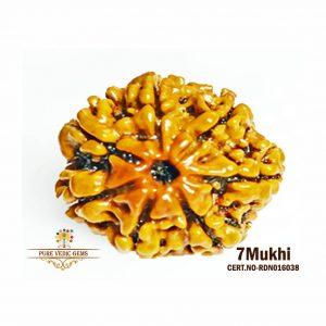 7Mukhi-2444gm-P865-rdn016038