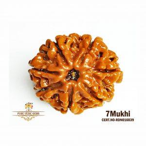 7Mukhi-2612gm-S303-rdn016039