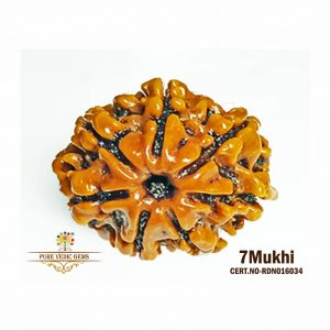 7Mukhi-2638gm-Y641-rdn016034